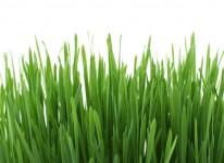 green grass environment