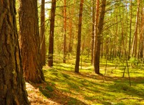 forest trees nature environment