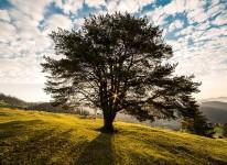 tree nature beauty natural environment