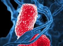 bacteria disease illness
